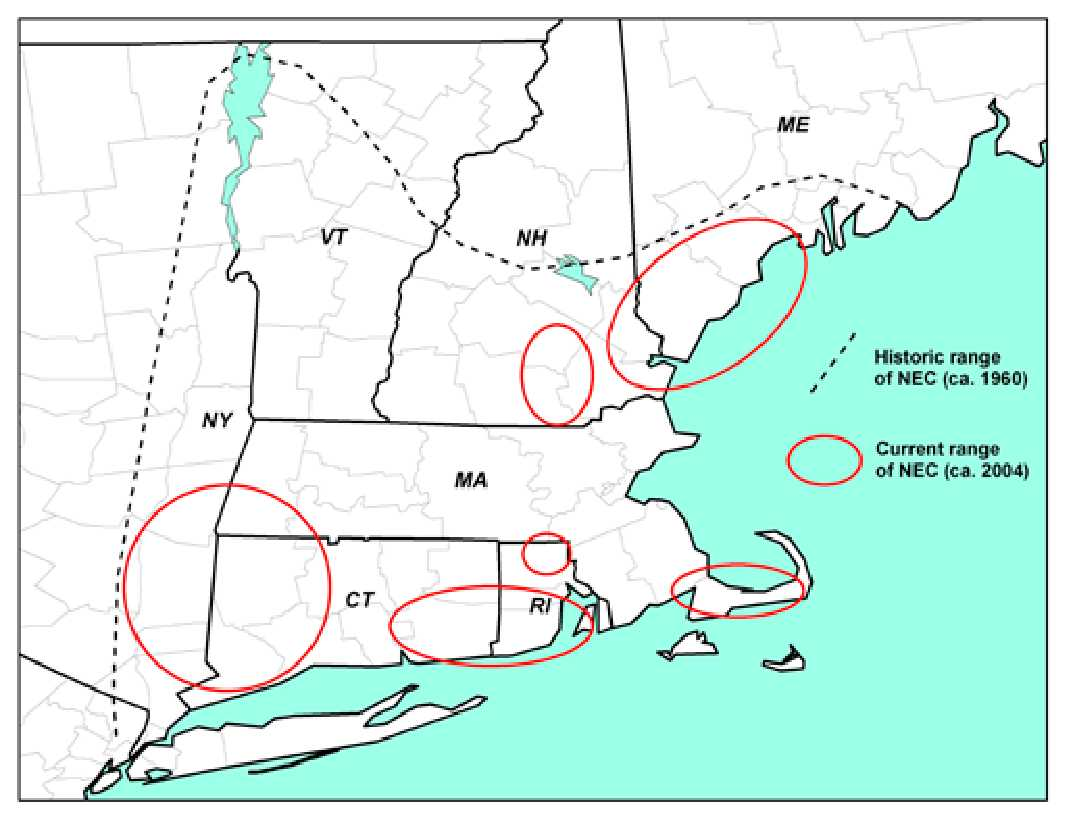 Northeast Cottontail Historic and Current Range Map from FWS Fact Sheet 2011