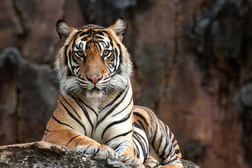 Tiger King Shines Light on an Endangered Species Act Quirk